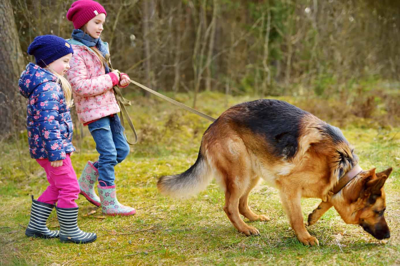 Are German Shepherds Good With Babies