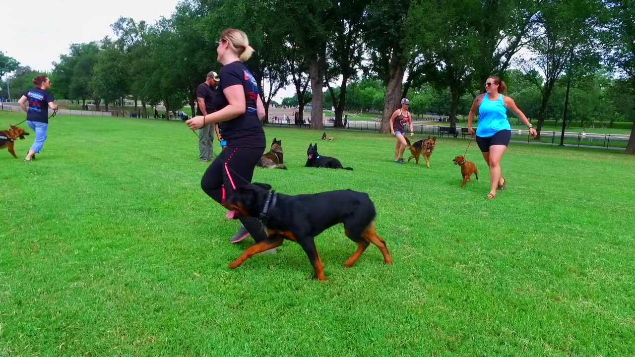 How To Train A German Shepherd Positive Interaction