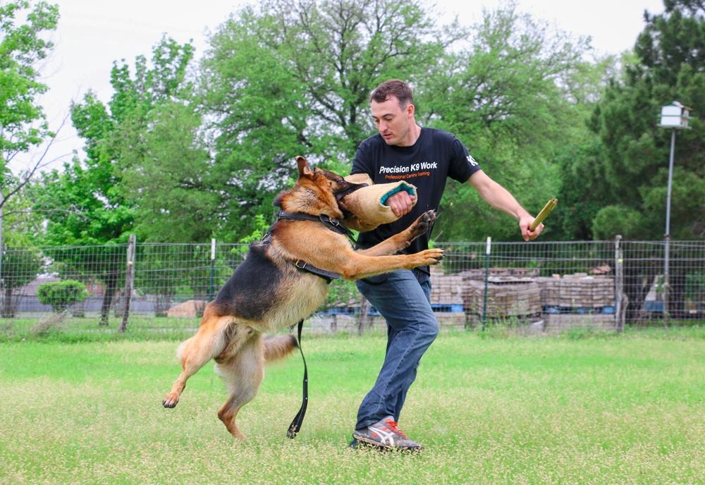 Why Are German Shepherds A Great Choice As A Guard Dog - Image By precisionk9work