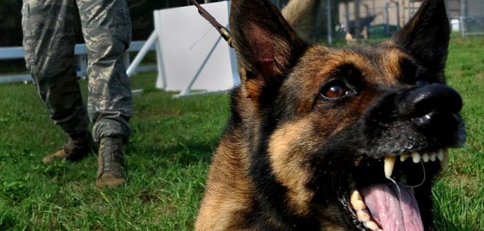 How To Control The Aggression Of The German Shepherd
