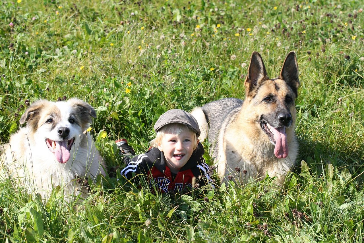 Are German Shepherds Safe With Babies?